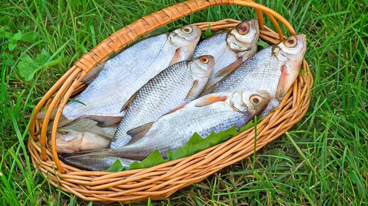 Was hat mein Fisch mit Ackerfläche zu tun?