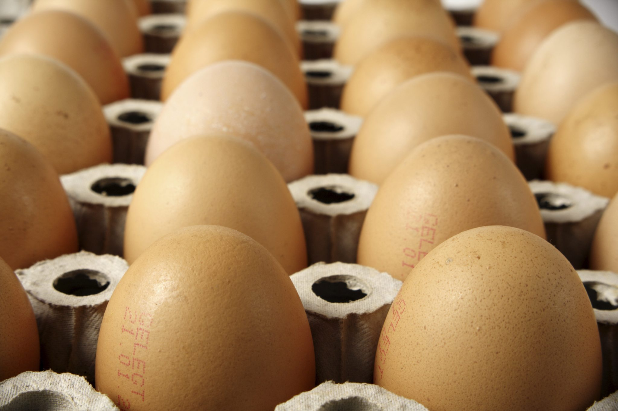 Gute Eier kann man am Code erkennen: Bio Eier haben eine 0