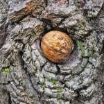 Eine Schatzliste für die Suche im Wald machen? Kein Problem!