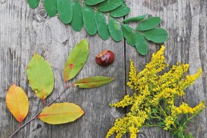Mit Wiedererkennungswert: Bild aus Pflanzen zum Nachlegen