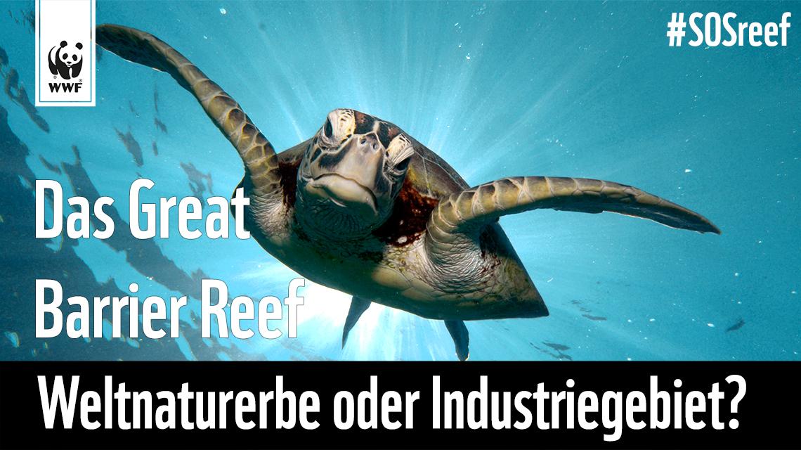 WWF Great Barrier Reef Schildkröte - Schütze sie!