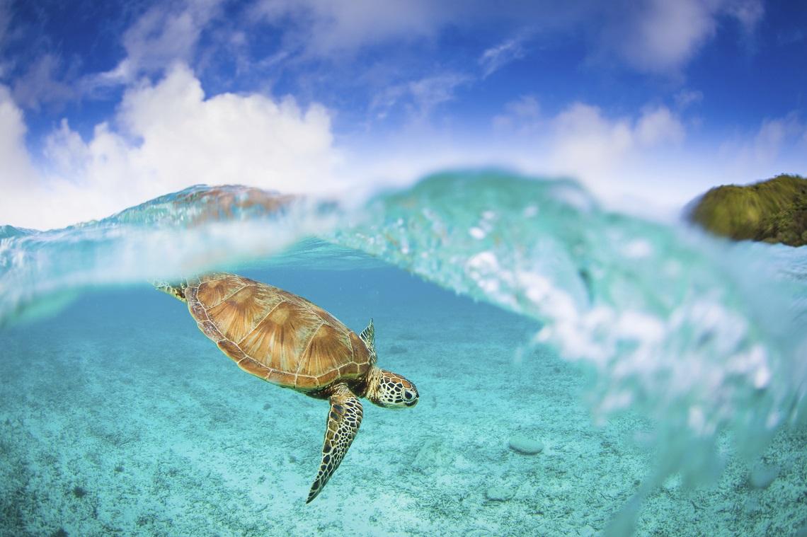 Einmal das Great Barrier Reef mit eigenen Augen zu sehen, ist der Wunsch vieler Meeresforscher © iStock / Getty Images