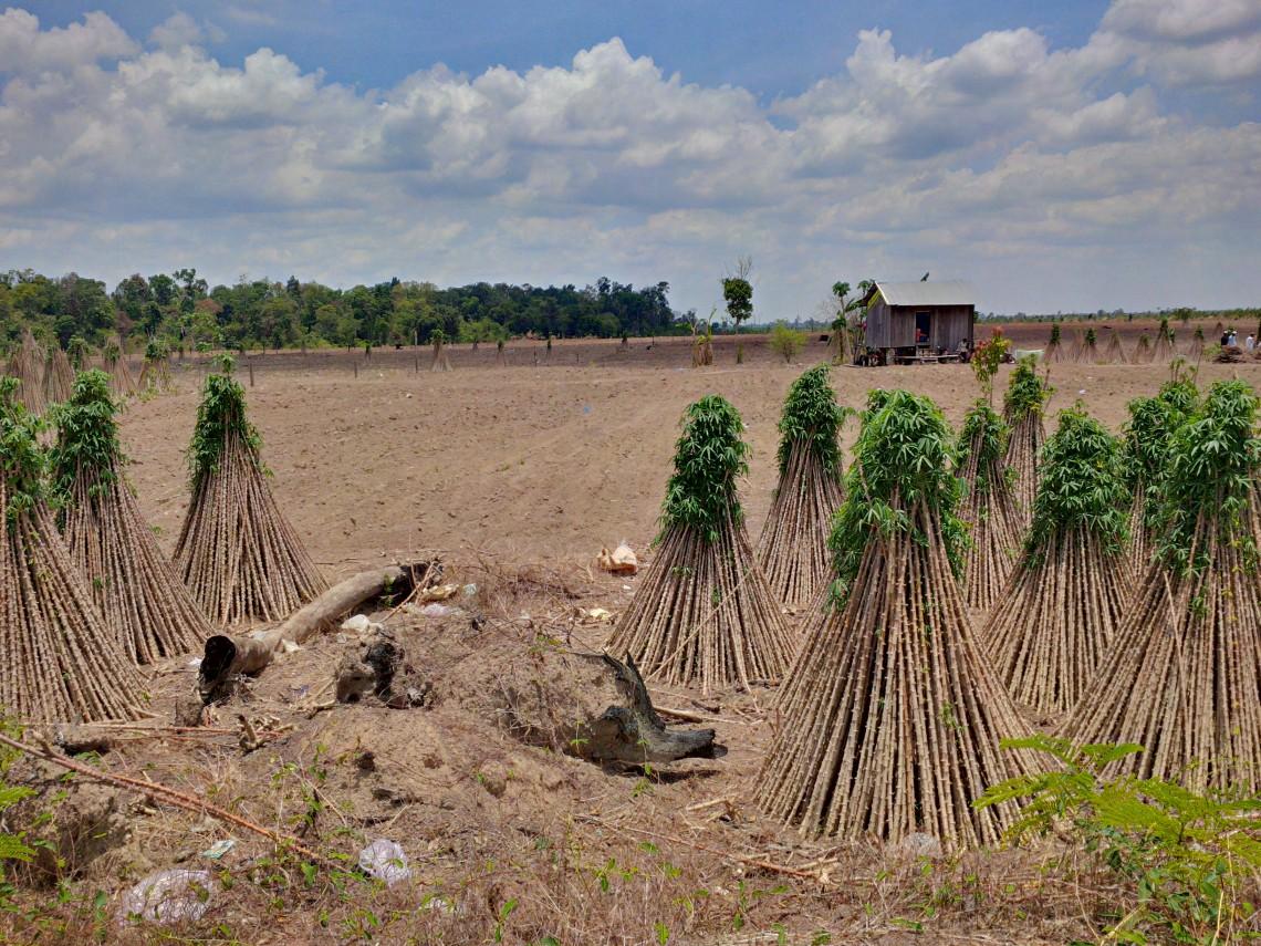 Entwaldung in Kambodscha © Arnulf Koehncke / WWF