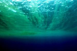 Auch das Meeresleuchten geht auf Geißelalgen zurück. Hier aus der Tauchperspektive. ©Philipp Kanstinger, WWF