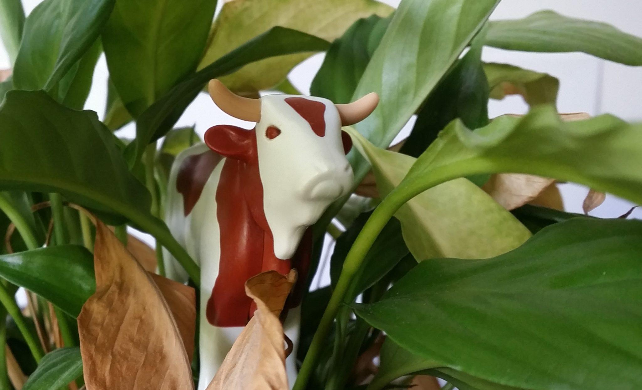 """Plastikkuh zwischen Grünpflanzen: Coup (sprich """"Kuh"""") der Woche: Unsere Presseschau"""