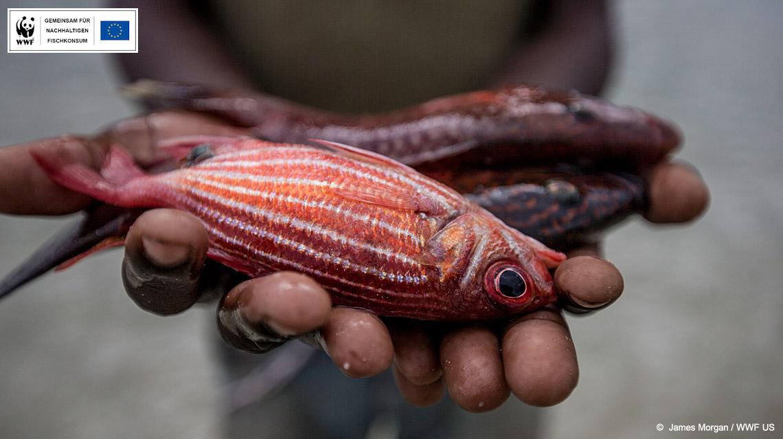 Der Fisch, den wir in Europa zu viel essen, fehlt in anderen Ländern. © James Morgan, WWF