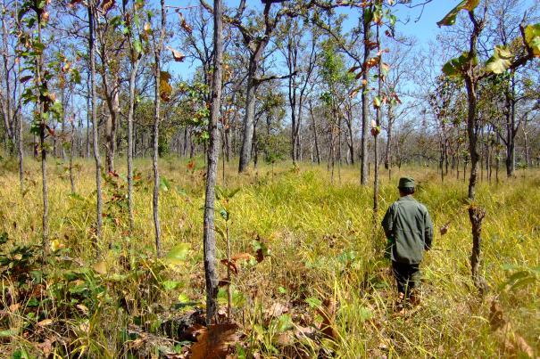 Tiere zählen: Zu Fuß durch den Trockenwald auf der Suche nach seltenen Tieren.