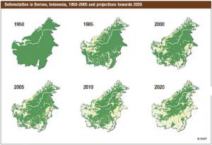 Borneo hat eine der höchsten Entwaldungsraten der Welt. © WWF
