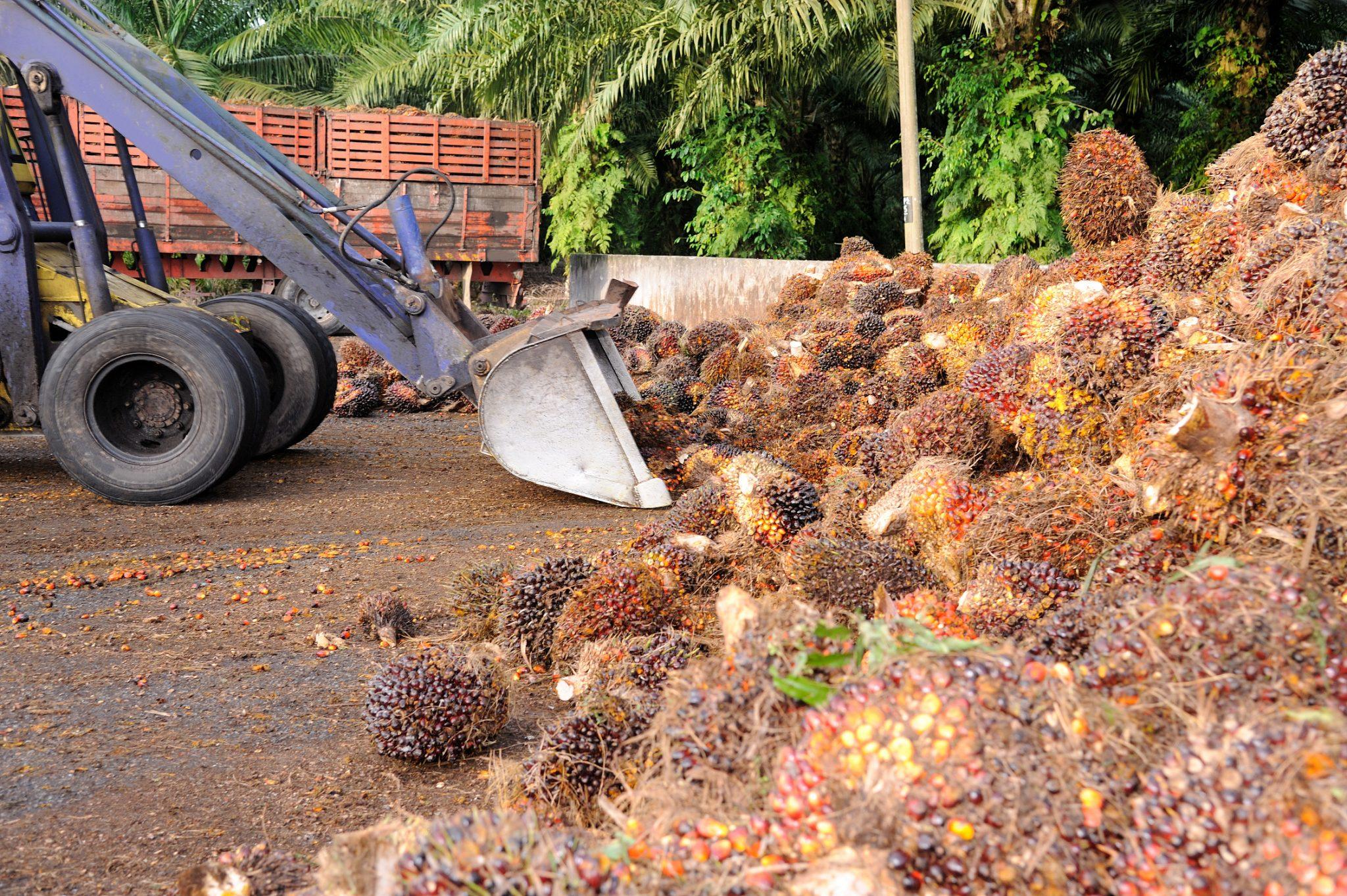 oher das Palmöl kommt ist vielen Firmen noch egal (c) iStock / getty images