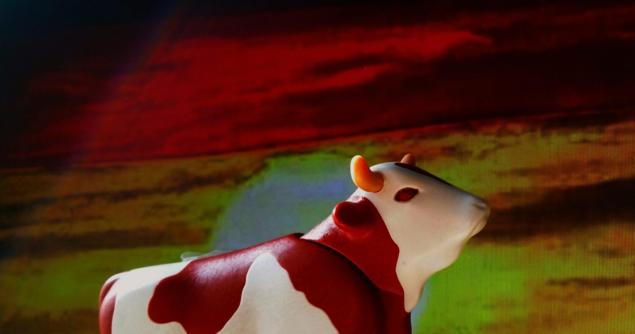 Die Kuh der Woche