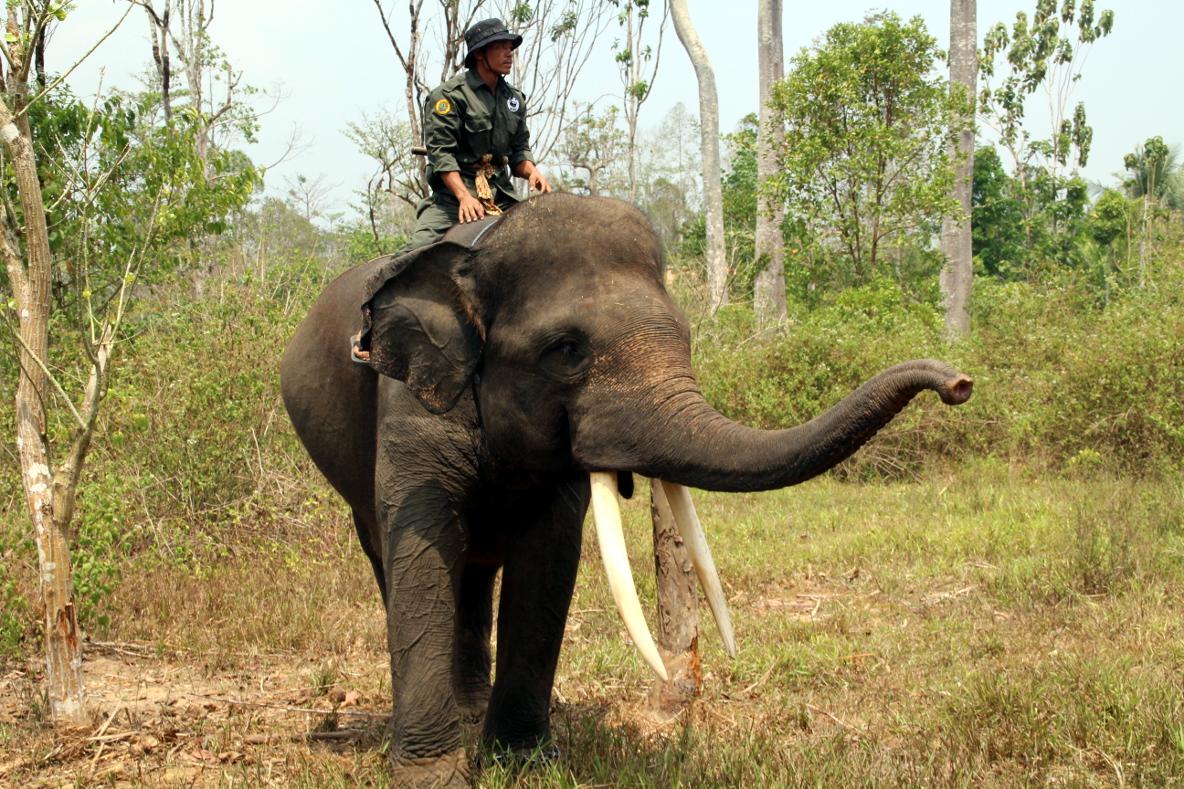 WWF-Ranger auf Patrouillen-Elefant © Arnulf Köhncke / WWF DE