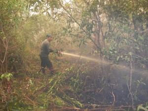 Indonesien: Mann im Busch löscht Feuer.