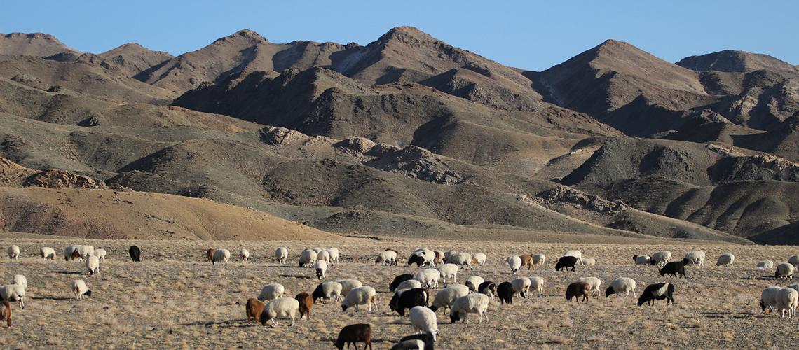 Herde mitten im Nationalpark: Konflikte sind in der Mongolei vorprogrammiert. © Oliver Samson, WWF