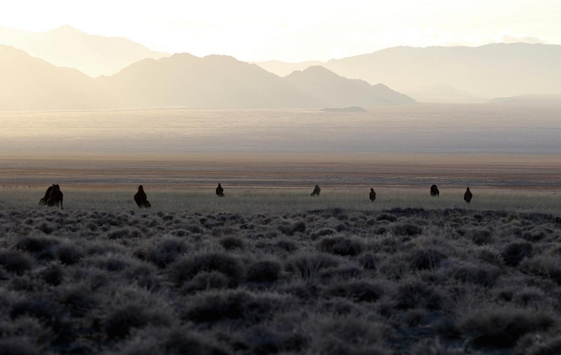Kamele in der unendlichen Weite der Mongolei.