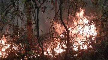 Brennender Wald in Indonesien