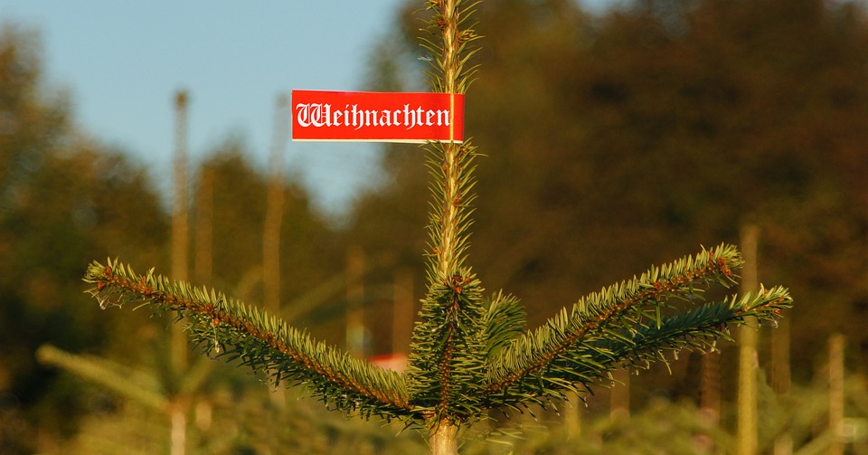 Weihnachtsbaum: Für viele ist Weihnachten ohne undenkbar