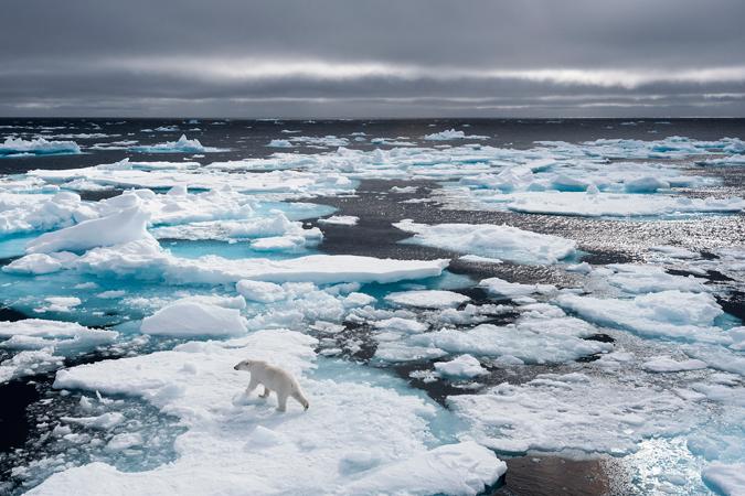 Ein Eisbär auf dem Packeis. © Kerstin Langenberger