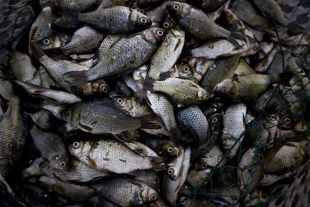 Tote Fische in China: Wie sieht nachhaltige Fischerei aus?