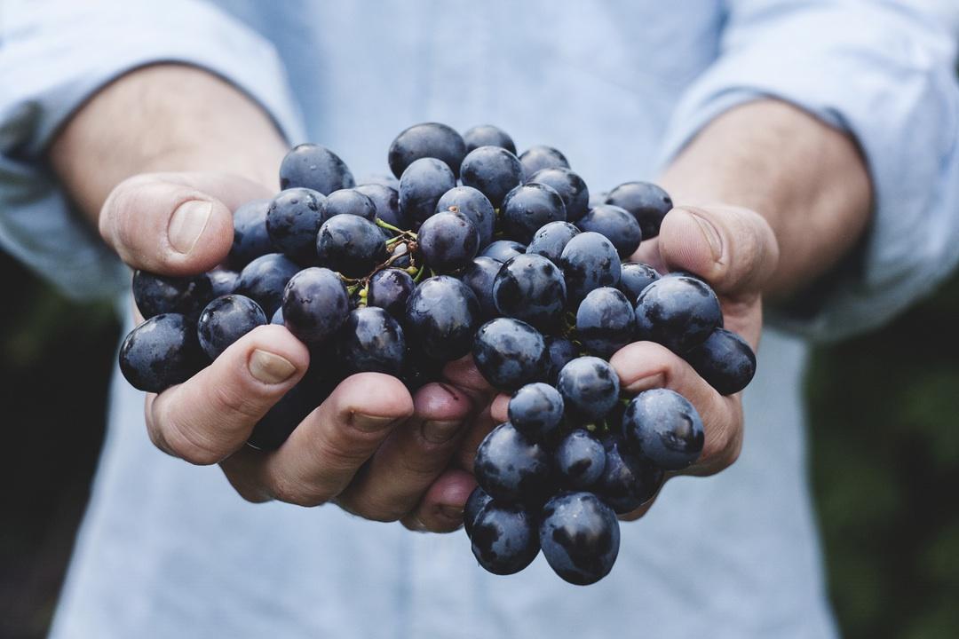 Wieviel ist uns Landwirtschaft wert? Maja Petric CC BY bit.ly/1S21y7X