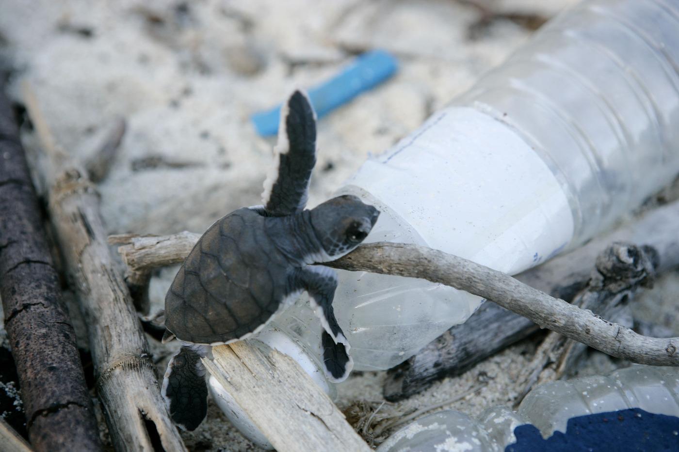 Plastikmüll am Strand als Hindernis für eine Schildkröte