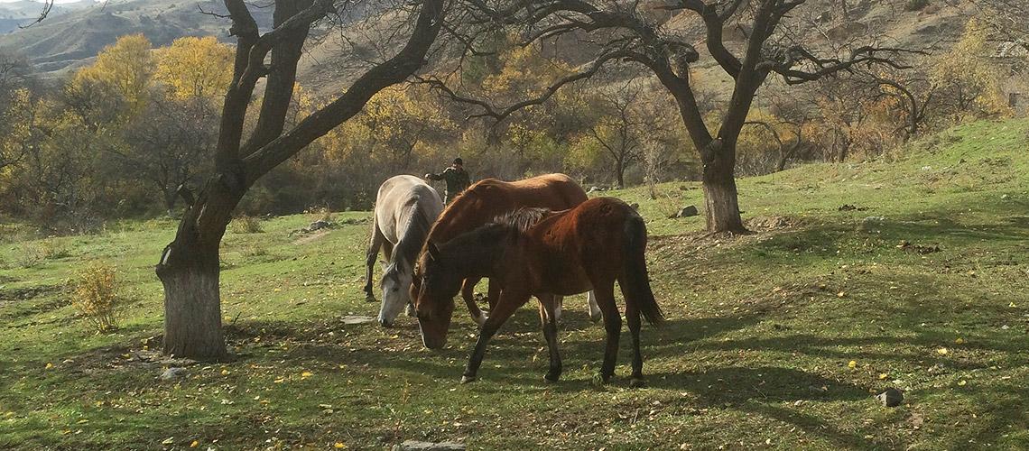 Die Sonne lacht für die Pferde Hope, Spirit und Horst. Im Hintergrund lacht ein Mensch. © WWF Armenien