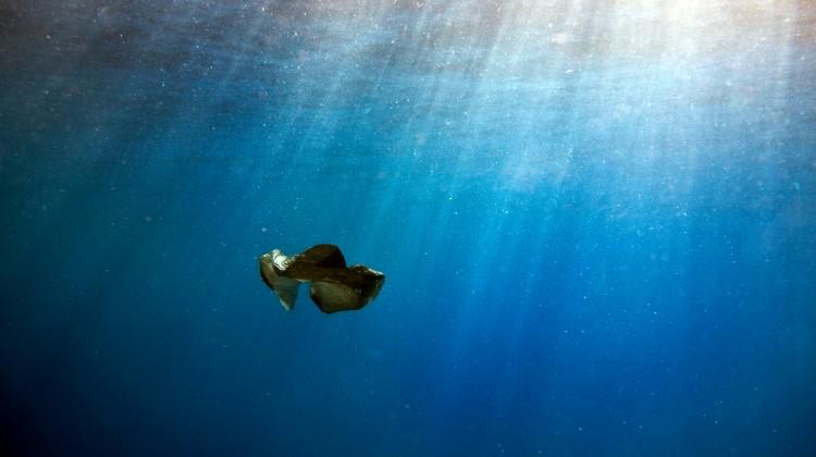 Müll im Meer: Aus der Plastiktüte wird Mikroplastik