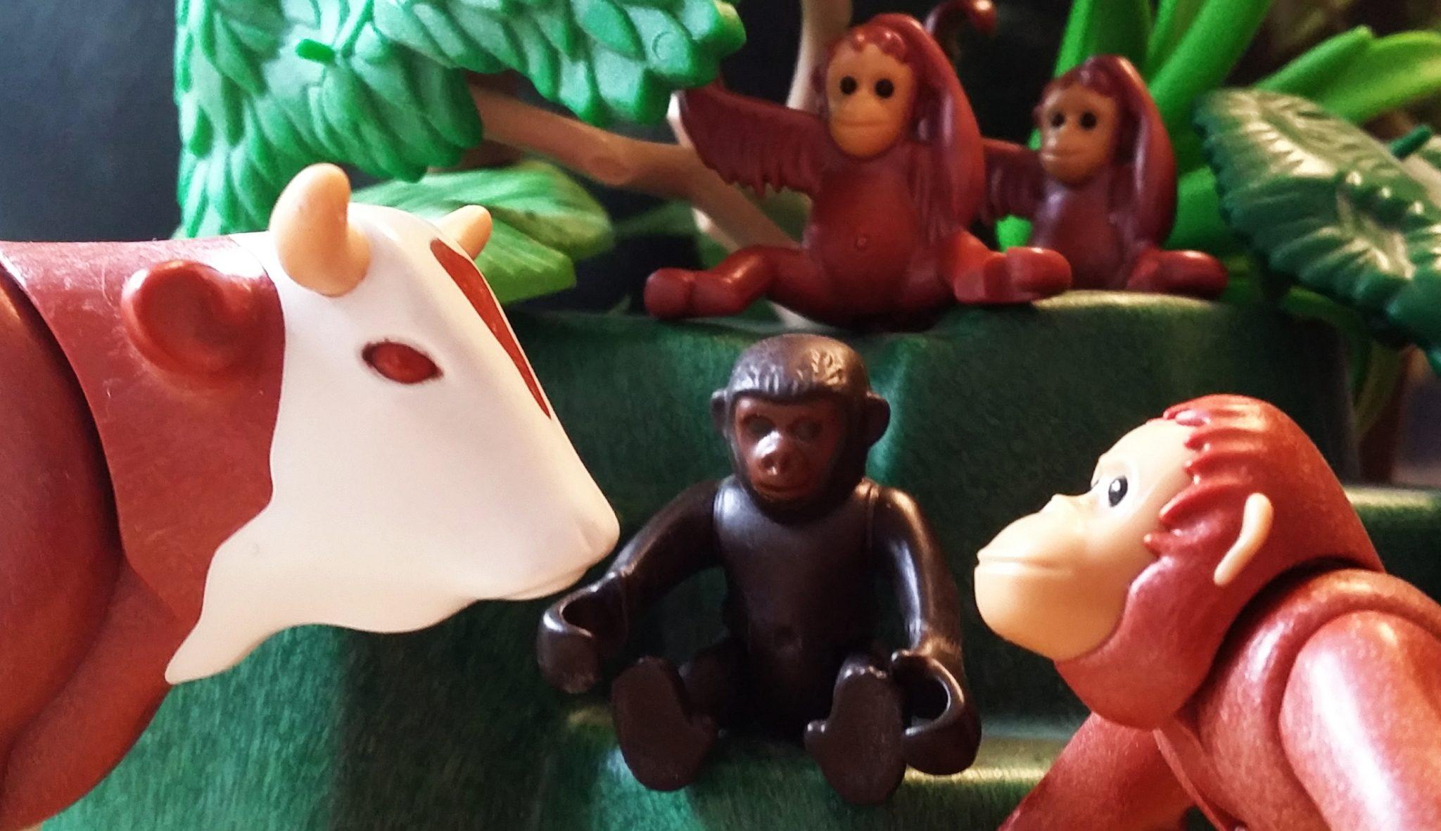 Der Kuh der Woche begrüßt das Jahr der Affen. © Roland Gramling / WWF