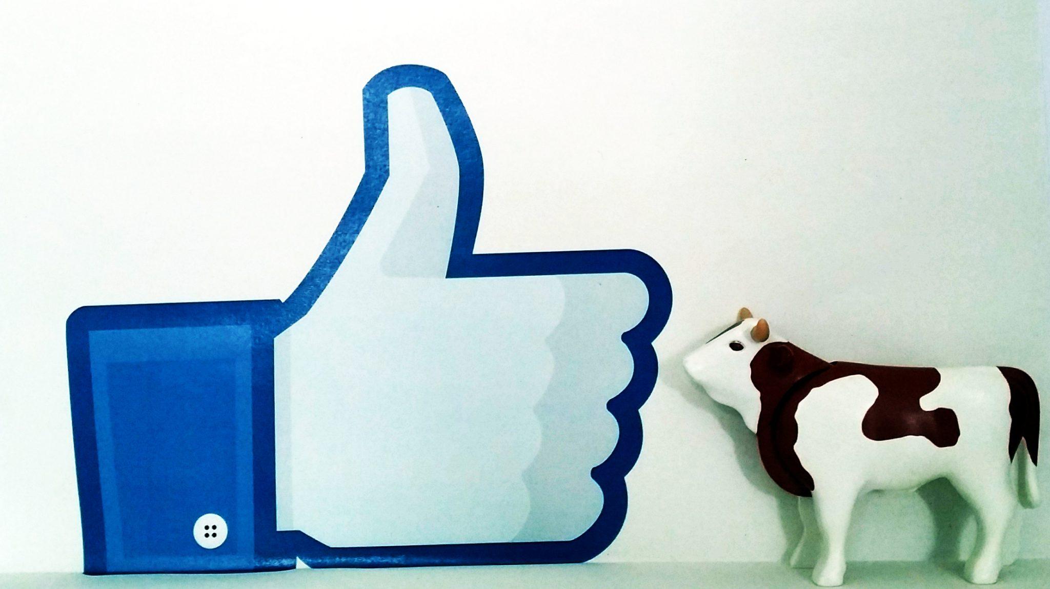 """Plastikkuh steht vor einem """"Like""""-Zeichen. © Roland Gramling / WWF"""