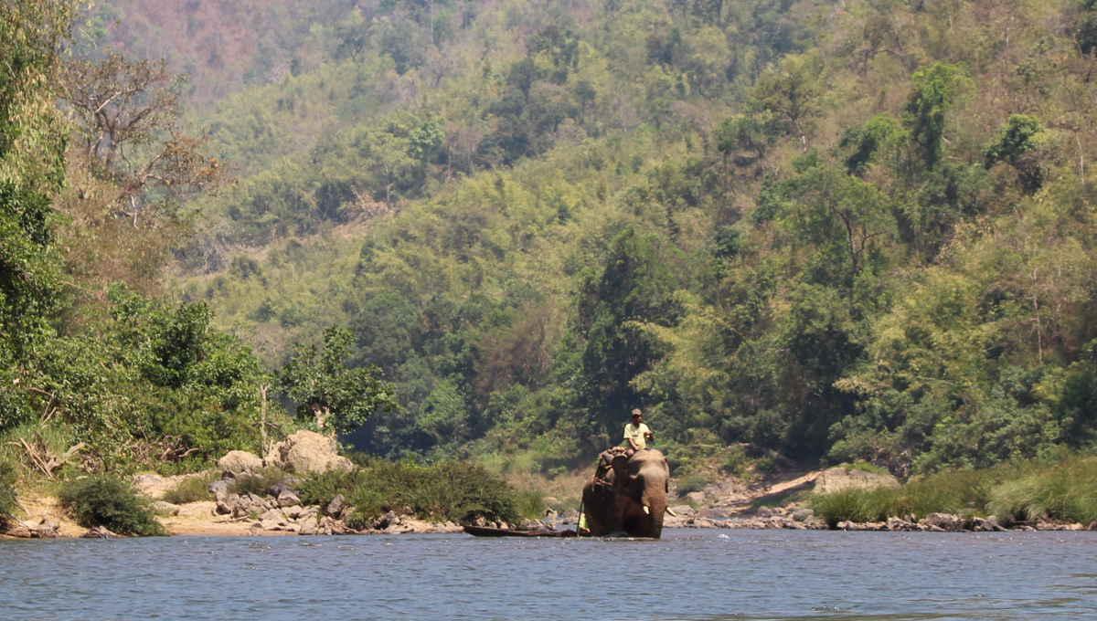 Asiatischer FElefant steht in maynmar im Fluss auf dem Weg zum Waldschutzprojekt des WWF in Myanmar