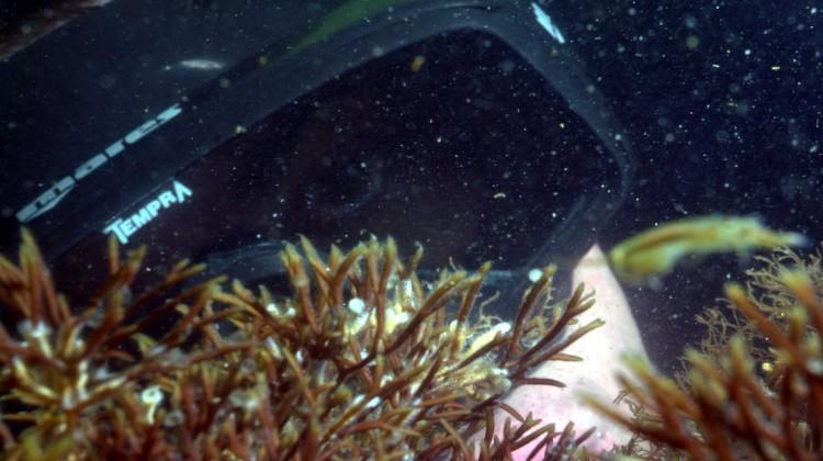 Auf der Suche nach dem Hering: WWF Taucher in der Ostsee