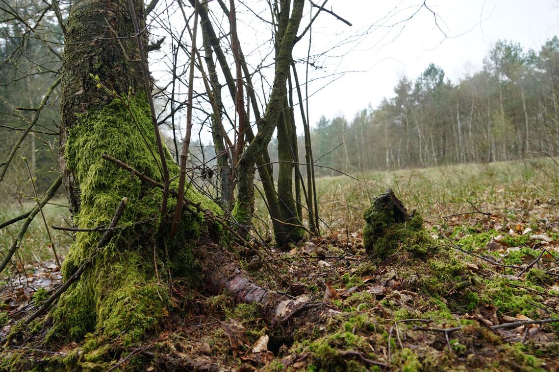 Mit Moos überwachsener Baumstamm © Robert Günther / WWF