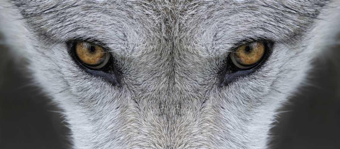 Naturschutz: Die Arbeit der EU-Kommission steht unter Beobachtung. © iStock / Getty Images