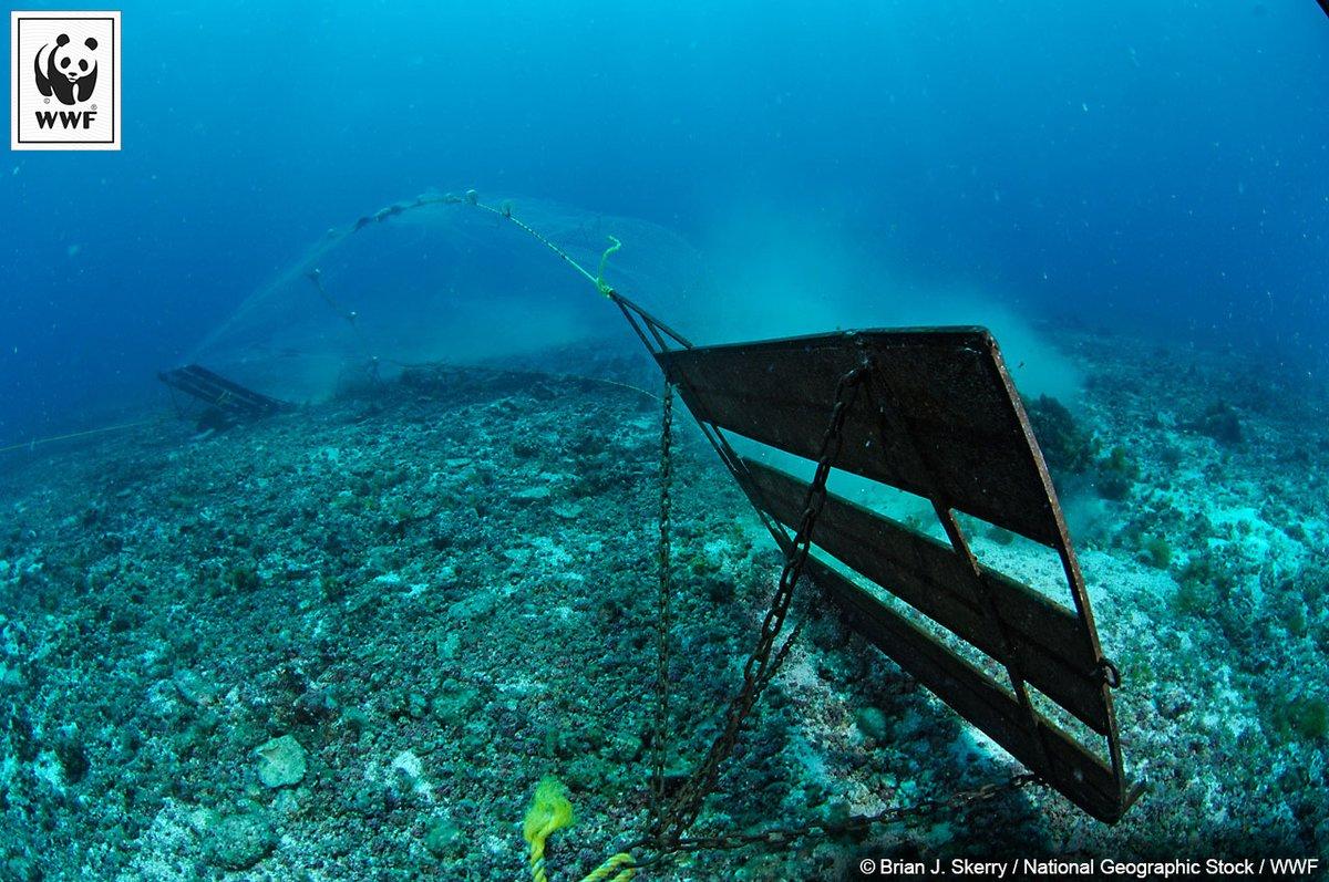 Bodenschleppnetze rasieren den Boden der Tiefsee. Riffe, Korallen und Bodenlebenwesen sind verloren. Der WWF setzt sich für ein Verbot ein.