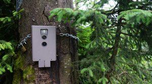 Kamerafalle im Bayerischen Wald