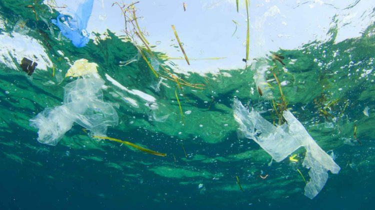 Plastikmüll treibt im Meer. Ein Verbot von der Plastiktüte könnte helfen.