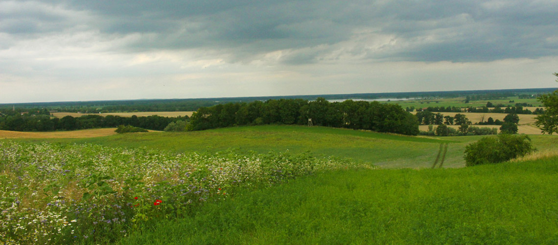 Blühstreifen zwischen Wiesen und Äckern: Bei aller Bewirtschaftung auch Lebensräume für Insekten und andere Arten erhalten. Das ist Landwirtschaft für Artenvielfalt.