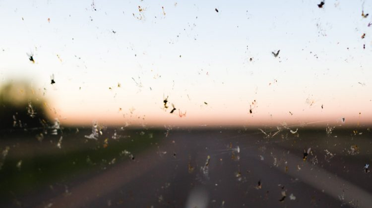 Autoscheibe mit Insekten, im Hintergrund die Straße. Früher musste man oft die Autoscheibe putzen, so viele Insekten klebten daran. Dass das heute nicht mehr so ist, ist ein schlechtes Zeichen für die Artenvielfalt.