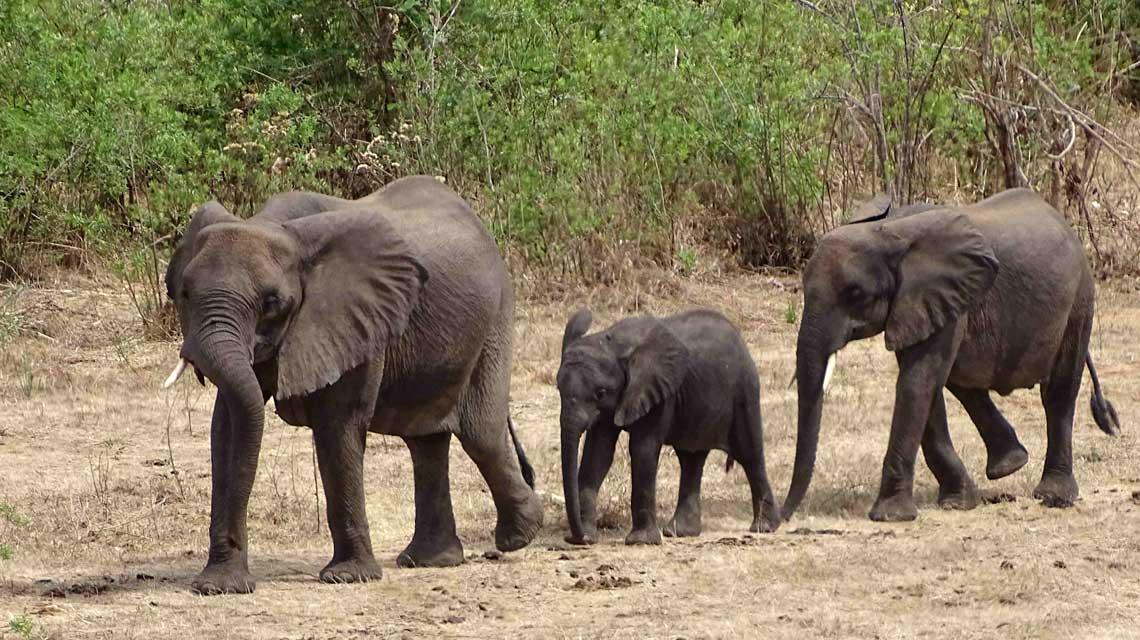 Was für ein Glück! Wir haben wirklich eine Elefanten-Herde im Selous gesehen. © Melanie Gömmel / WWF