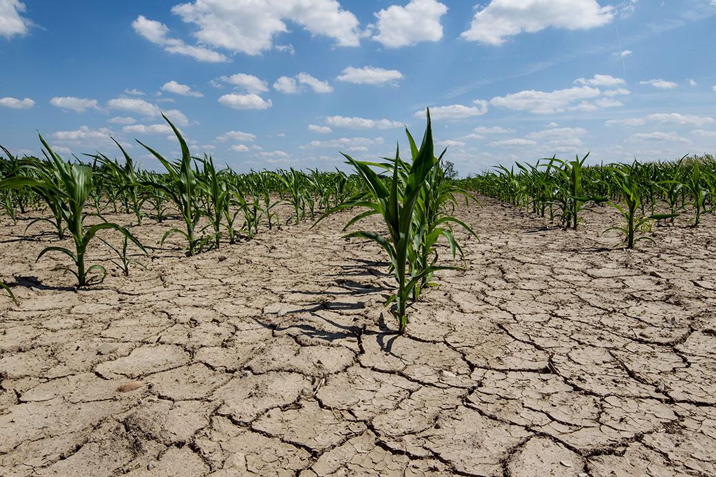 Ein sichtbarer Ausdruck des Klimawandels: Dürre. Das betrifft auch unser Lebensmittel-Angebot im Supermarkt.