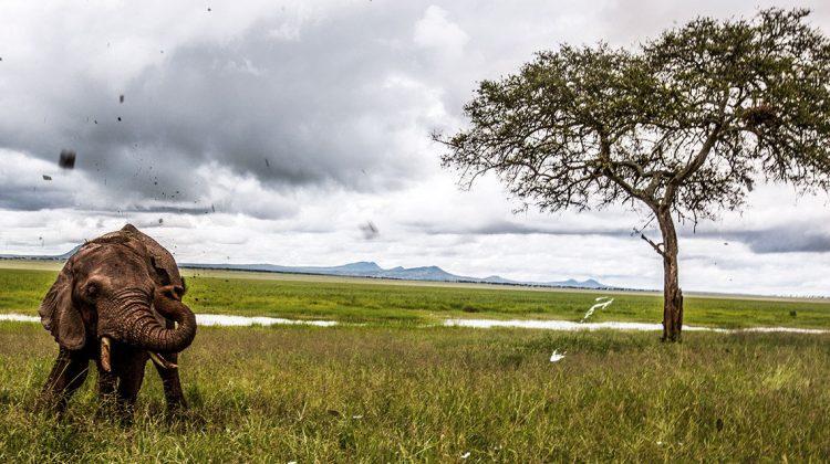 100.000 Unterschriften für Selous - da freuen sich nicht nur die Elefanten © James Morgan / WWF-US