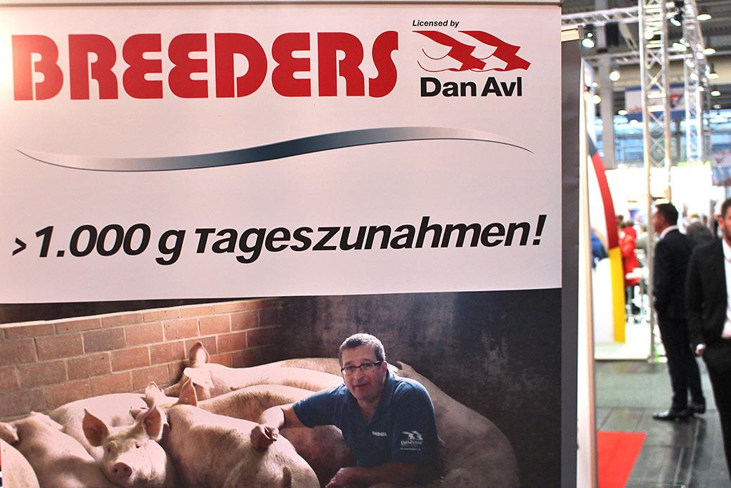 Wahnsinn im Stall: Ein Schwein, dass 1000 Gramm am Tag zunimmt. © Markus Wolter / WWF