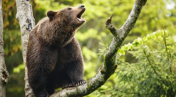 NatureAlert: Europas Natur ist in Gefahr. © iStock / Getty Images