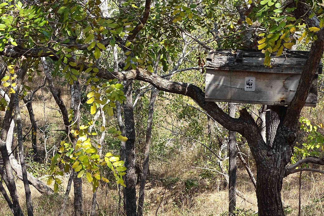 Auch das hilft gegen Wilderei: Bienenkasten in einer der Pufferzonen des Selous in Tansania als alternatives Einkommen. #SaveSelous!