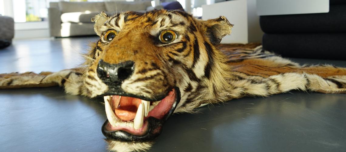 Tigerfell mit Kopf als Teppich auf dem Fußboden: Es stammt aus der Aservatenkammer des Zolls: Dieser Tiger ist für ein Souvenir gestorben. Aber es gibt auch Souvenirs, von denen man gar nicht unbedingt weiß, dass sie Arten gefährden und illegal sind. Der WWF Souvenir-Ratgeber klärt auf.
