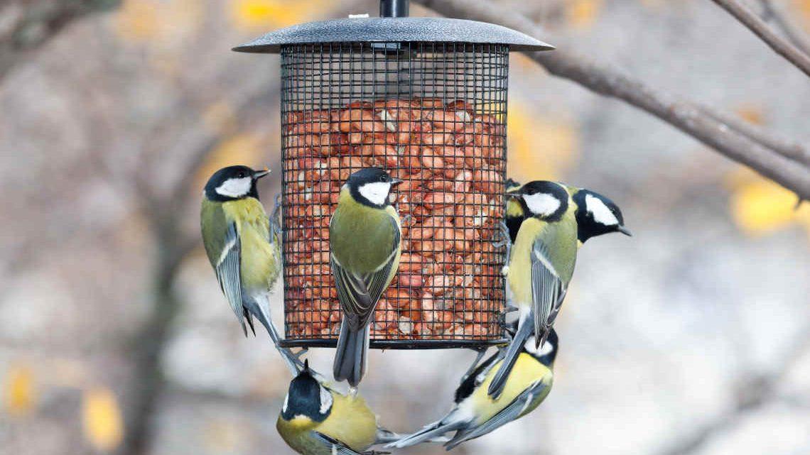 Meisen am Vogelhaus  - wann soll man sie füttern? © iStock/getty images