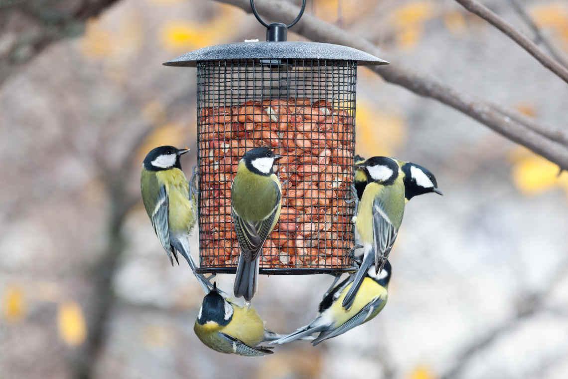 Vögel soll man füttern - aber richtig