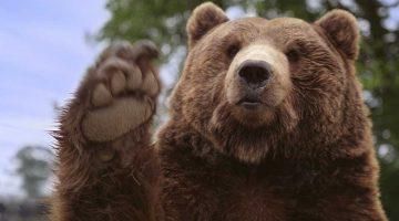 Da freuen sich nicht nur der Bär: Europas Naturschutzgesetze bleiben! © iStock / Getty Images