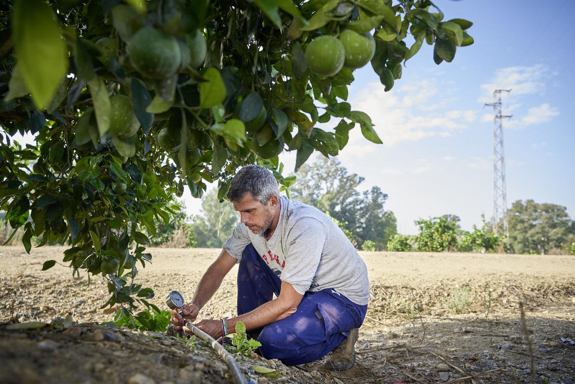 Prüfung der Bewässerung auf der orangen und Zitronen Finca in Andalusien, wo Früchte für das Edeka wwf Projekt wachsen