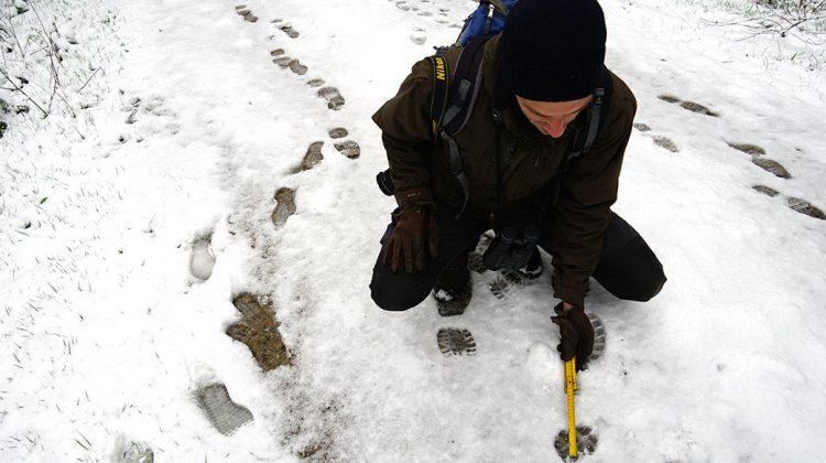Spurenlesen im Schnee: Mann kniet über einer Fährte im verschneiten Wald