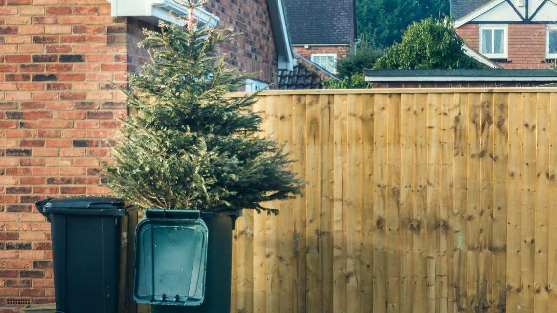 Was von Weihnachten bleibt: Christbaum in der Mülltonne